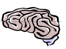 Gehirn 3